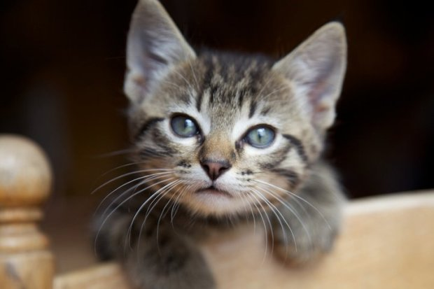 Micky Savage cat