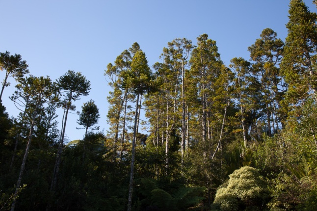 Titirangi Tree submission-2